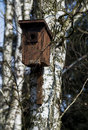 Cute wooden birdhouse hanging on the birch Royalty Free Stock Image