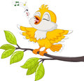 Cute yellow bird singing  on white background Royalty Free Stock Photo