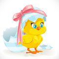 Cute yellow cartoon chicken little just hatched from an easter egg isolated on a white background Royalty Free Stock Photography