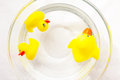 Cute yellow rubber ducks family floating on the water Royalty Free Stock Photo