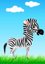 Cute Zebra Royalty Free Stock Photo