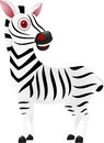 Cute Zebra Stock Photography