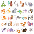Cute zoo alphabet with cartoon animals on white background and grunge letters wildlife learn typography cute