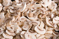Cuted fresh mushrooms Stock Image