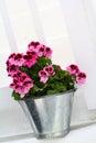 Cutie flower the we met along the way mykonos Stock Photography