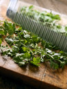Cutting coriander leaves Royalty Free Stock Image