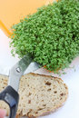 Cutting fresh cress Royalty Free Stock Photo