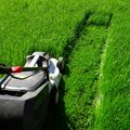 Cutting grass Royalty Free Stock Photo