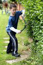 Cutting the hedge Stock Photography