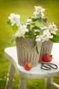 Cutting orange blossom in the garden and arranging in pretty buckets Royalty Free Stock Image