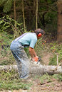 Cutting Tree Stock Photography