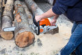 Cutting the tree Royalty Free Stock Photo
