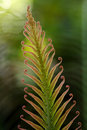 Cycad frons Stock Photography