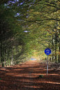 Cycle path in forest Stock Photo