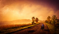 Cycling on the rural roads woman alone narrow in poland Royalty Free Stock Images