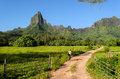Cycling on tropical Moorea Royalty Free Stock Photo