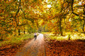 Cycling trough woods national park de hoge veluwe netherlands autumn Stock Photo