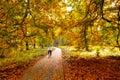Autumn cycling Royalty Free Stock Photo