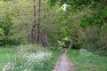 Cycling and walking path in spring landscape, forest with flowers Royalty Free Stock Photo