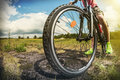 Cyclist on a Mountain Bike on a forest track Royalty Free Stock Photo
