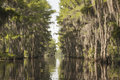 Cypress byway a through the trees at caddo lake in texas Stock Photography
