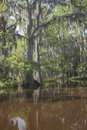 Cypress hideaway a landscape image of trees and thier reflections at caddo lake in texas Stock Images