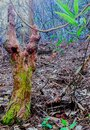 Cypress knees in the swamps of Louisiana, the Sportsmans Paradise yall Royalty Free Stock Photo