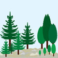 Cypress and pines on landscape. Eco park