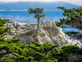Cypress solitaire pebble beach ca Photographie stock