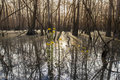 Cypress swamp at sunrise low view of in the american south Stock Photography