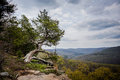 Cypress tree overlooking the buffalo river in arkansas Stock Photos