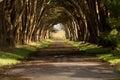 Cypřiš strom tunel