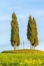 Cypress trees at a hill Royalty Free Stock Photo