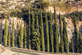 Cypress Trees row and road in a rural landscape, Europe. Royalty Free Stock Photo