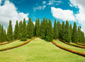 Cypress trees on top of  hill Royalty Free Stock Photo