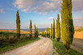 Cypresses Trees and ground road, morning sky - Tuscany