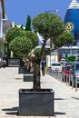 CYPRUS, NICOSIA - JUNE 10, 2019: City street with office American University of Cyprus AUC . Northern Cyprus. Flowerbed with a Royalty Free Stock Photo