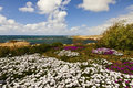 Cyprus seaside view white and pink flowers by the on the island of Royalty Free Stock Photo