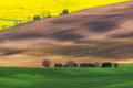 Czech republic south moravia moravian field plowed land rape the picturesque nature livestock Stock Image