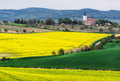 Czech republic south moravia rapeseed field near the village of kostelec picturesque nature livestock Stock Photo