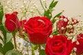 Czerwona róża