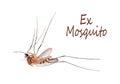 Död myggafluga ben i luften culicidae Royaltyfria Foton