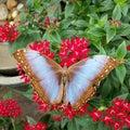 Dębny i błękitny motyl Zdjęcia Stock