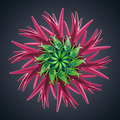 D abstract organic shape virus macro cybernetic flower or star Stock Photos