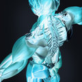 3D anatomy of back and spine