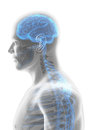 3D Illustration Male Nervous S...
