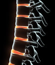 3D illustration of Skeleton system - X-ray human spine. Royalty Free Stock Photo