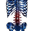 D item of thoracic rib in pain skeleton concept close up spinal and chest isolated over white background Stock Images