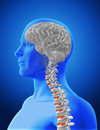 3D medical image showing spine and brain in male figure Royalty Free Stock Photo