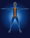 D medical man skeleton spine highlighted Stock Photo
